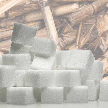 Extracting the Sucrose Through Sugar Processing